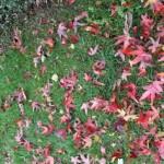 The Gallery: Autumn