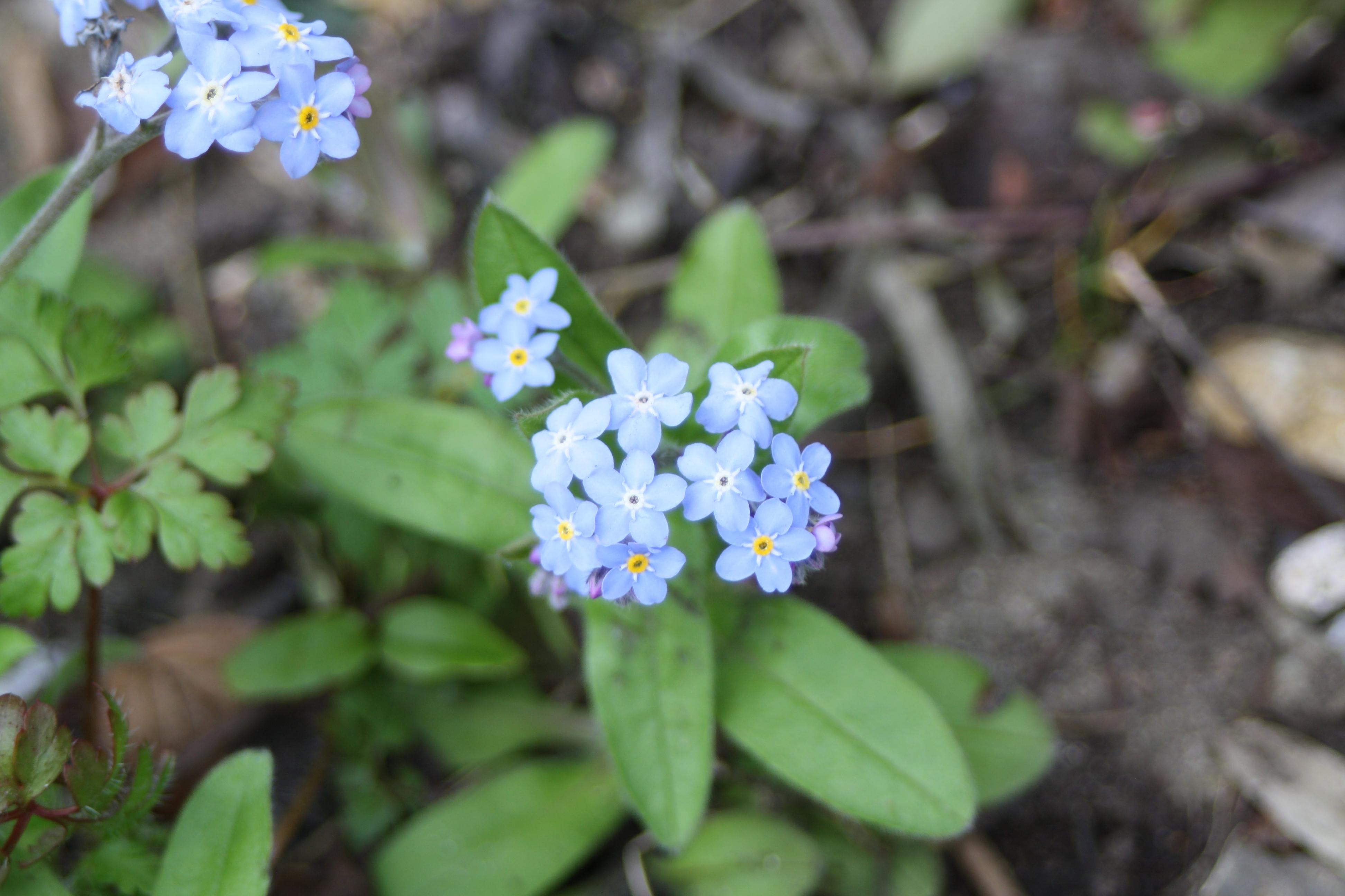 Flowers, spring, 365