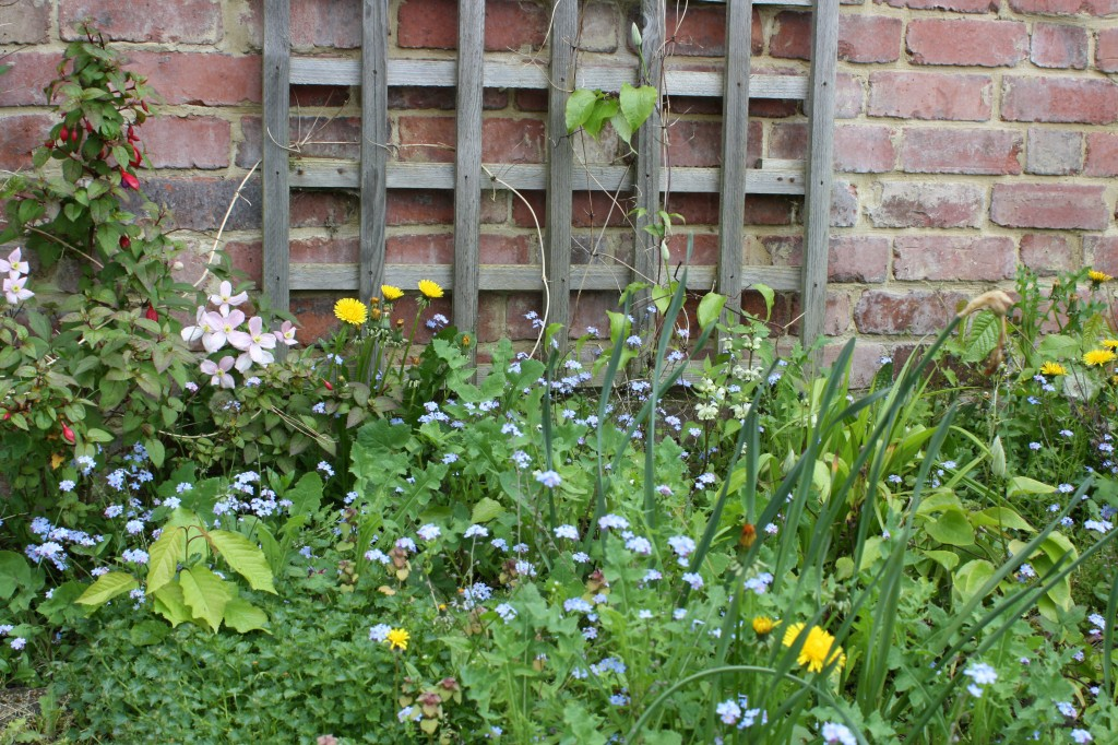 Garden, trellis, spring, flowers, how does your garden grow,