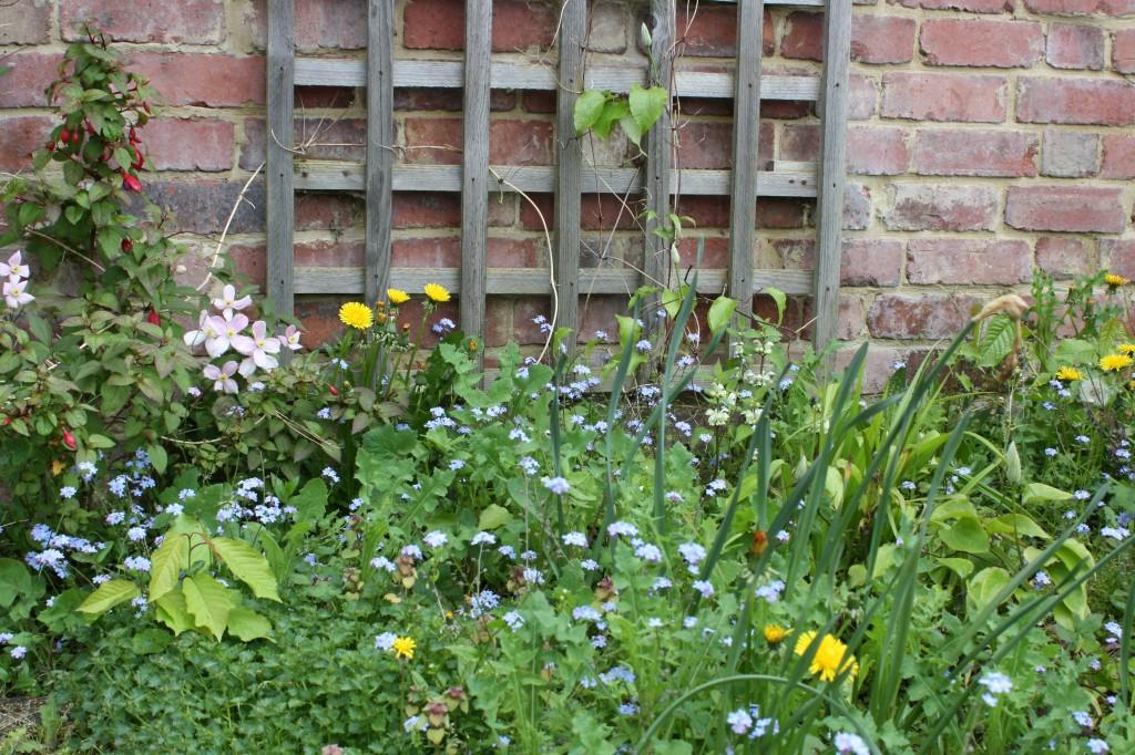 Garden, plants, weeds, spring, 365