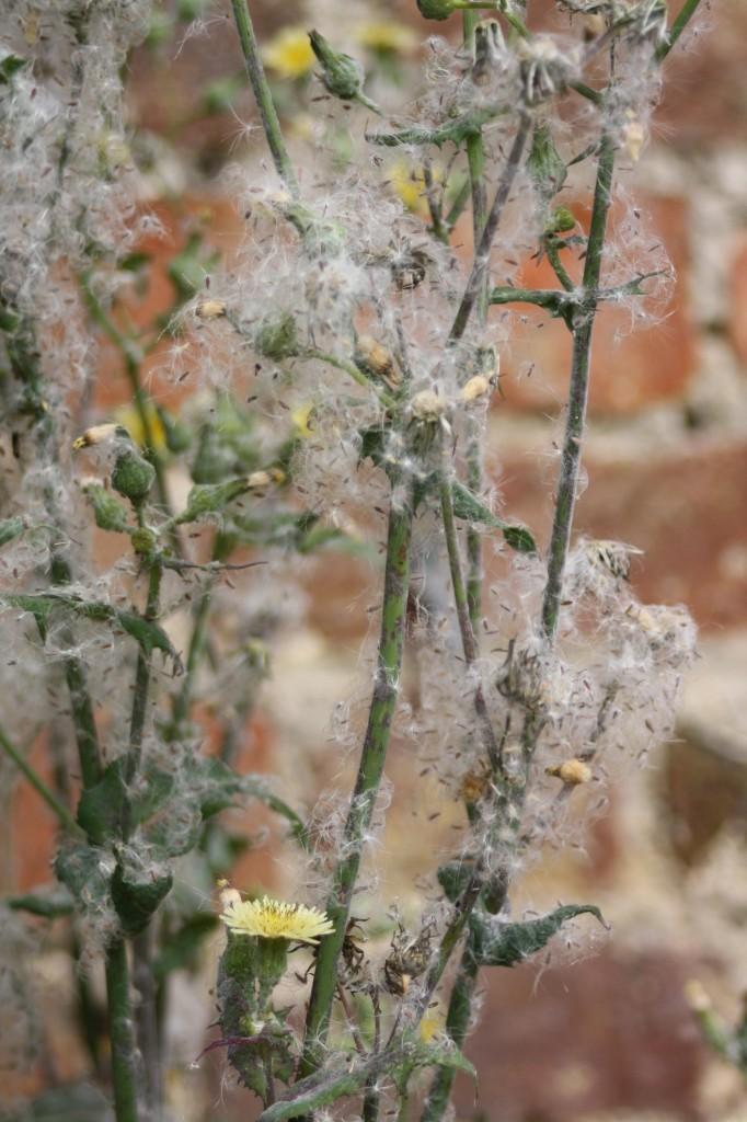 Weeds, Garden, 365