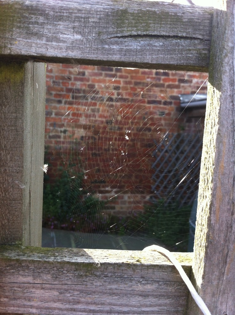 Cobwebs, garden, summer