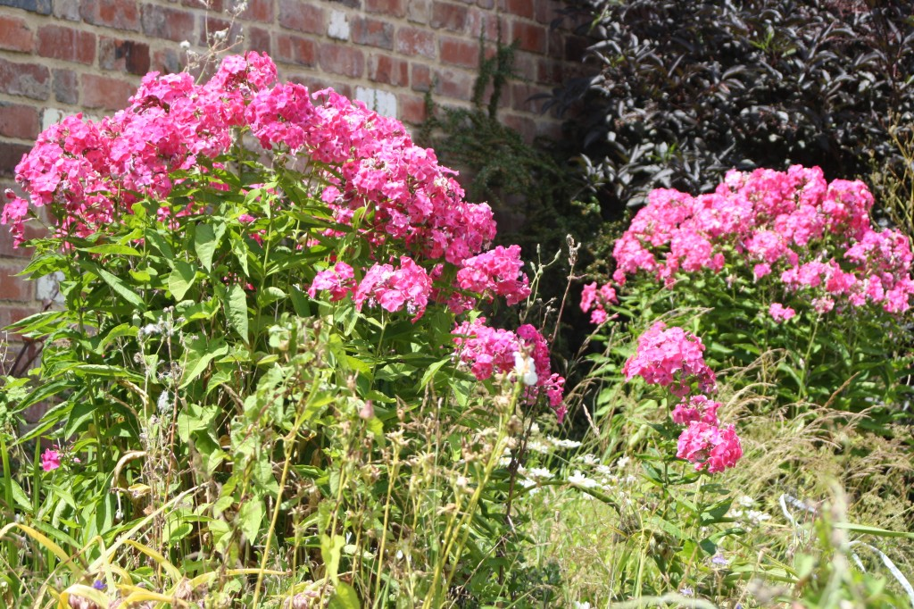Flowers, pink, garden, 365