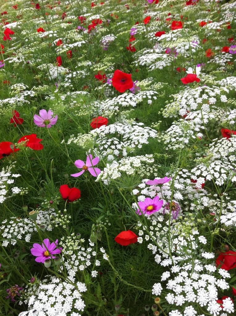 Wildlflowers, Flowers, Park, 365
