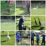 The magic of Coombe Mill