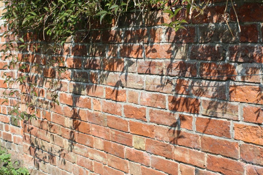 Garden, wall, shadows, 365