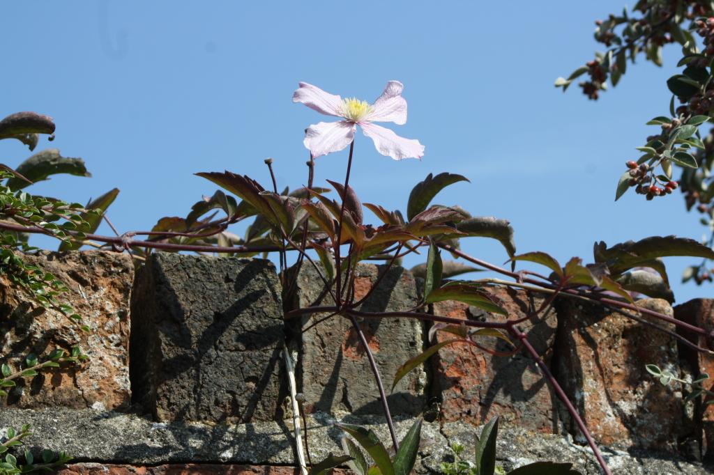 Sky, blue, summer, autumn, flower, 365