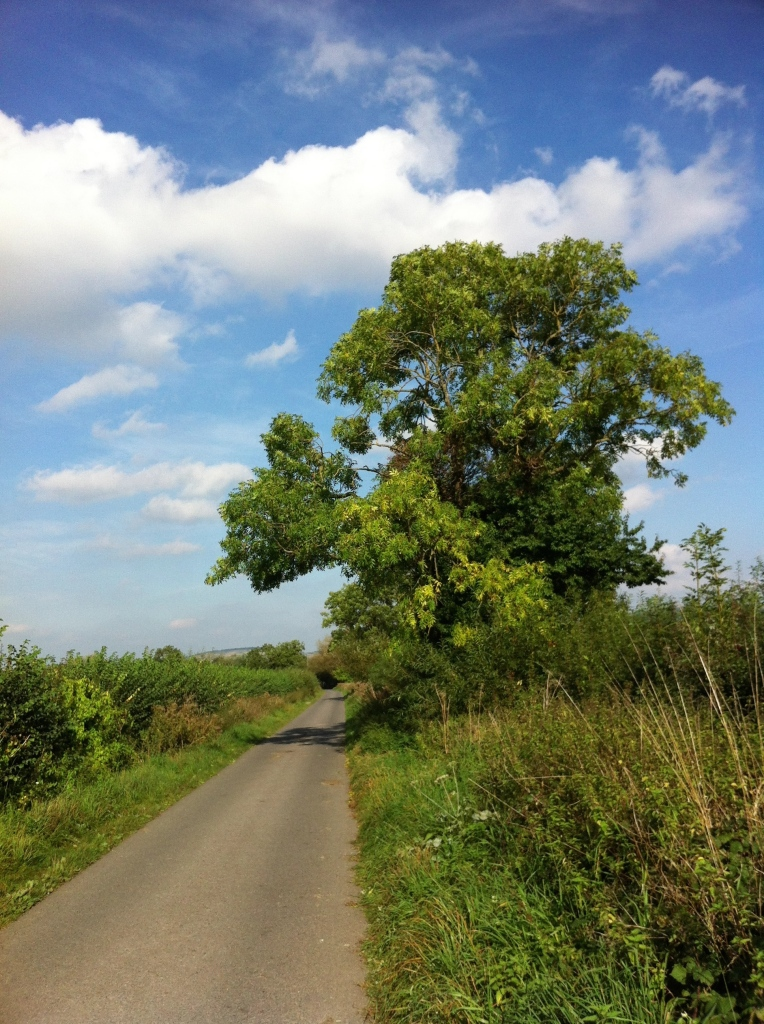 Tree, sky, countryside, walk, 365