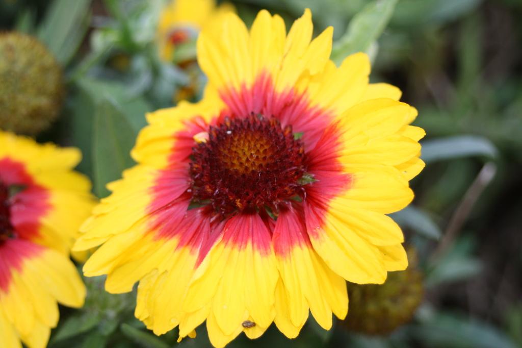 Flower, garden, autumn, 365