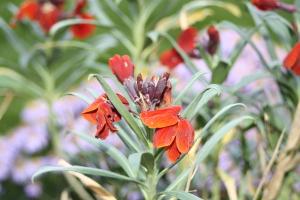 wallflowers, garden, autumn, How Does Your Garden Grow