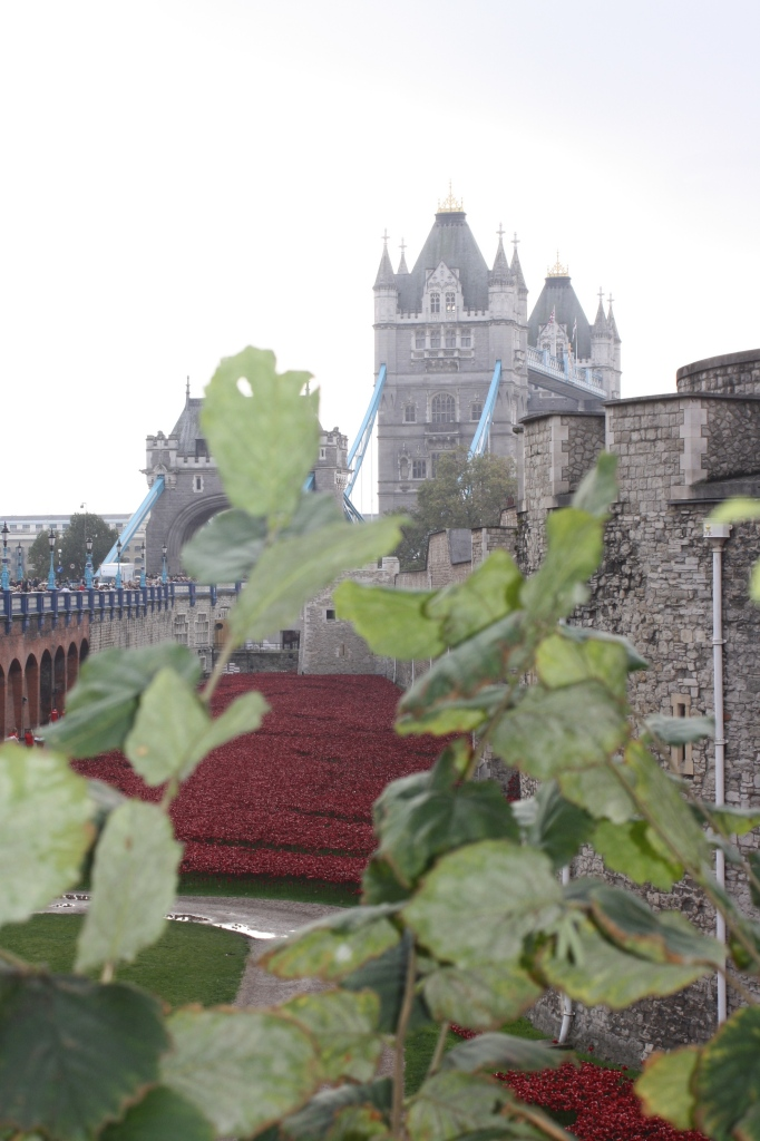 Silent Sunday, My Sunday Photo, Poppy, Tower of London