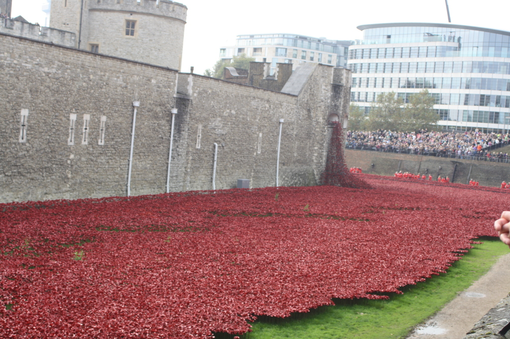 Poppies, Tower of London, Remembrance, London, 365