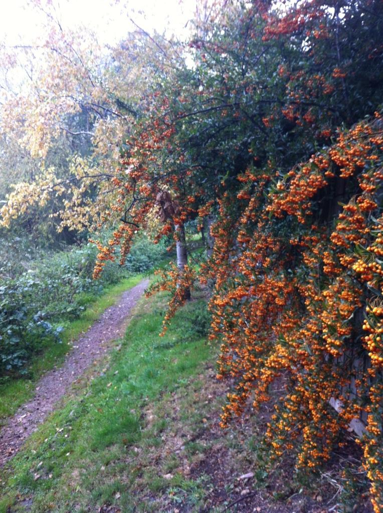 Autumn, trees, 365