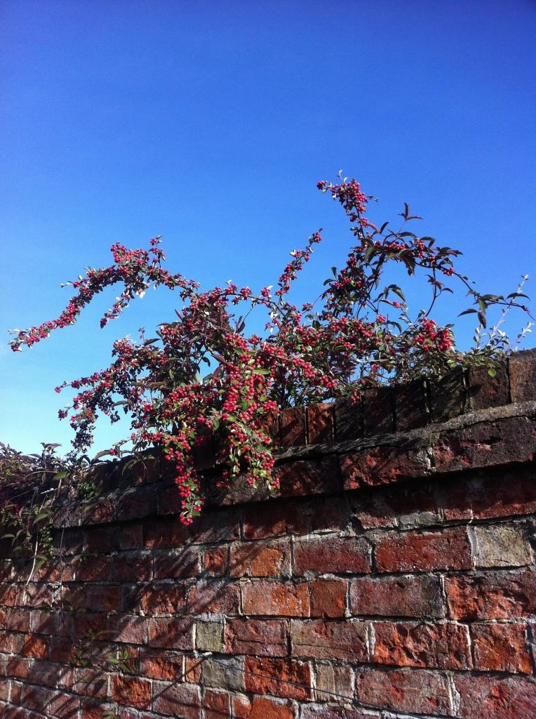 Autumn, garden, sky, 365