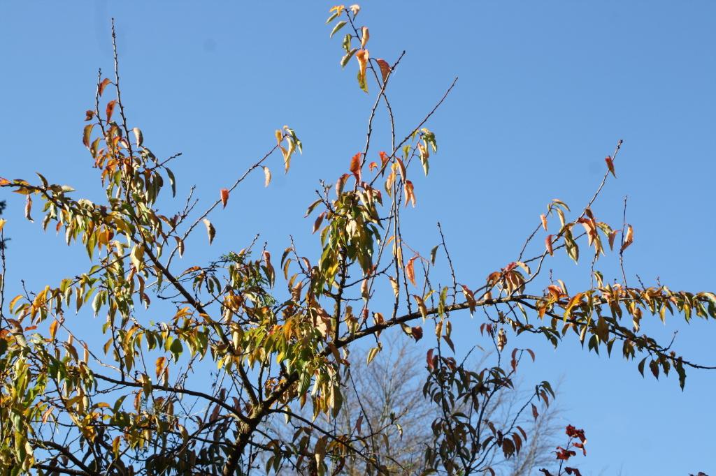 November, leaves, garden, 365
