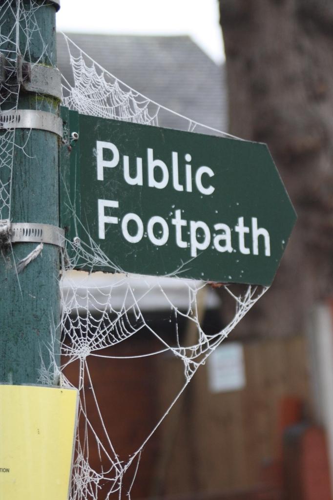 Cobwebs, winter, frost, 365