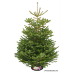Christmas tree from Pines and Needles