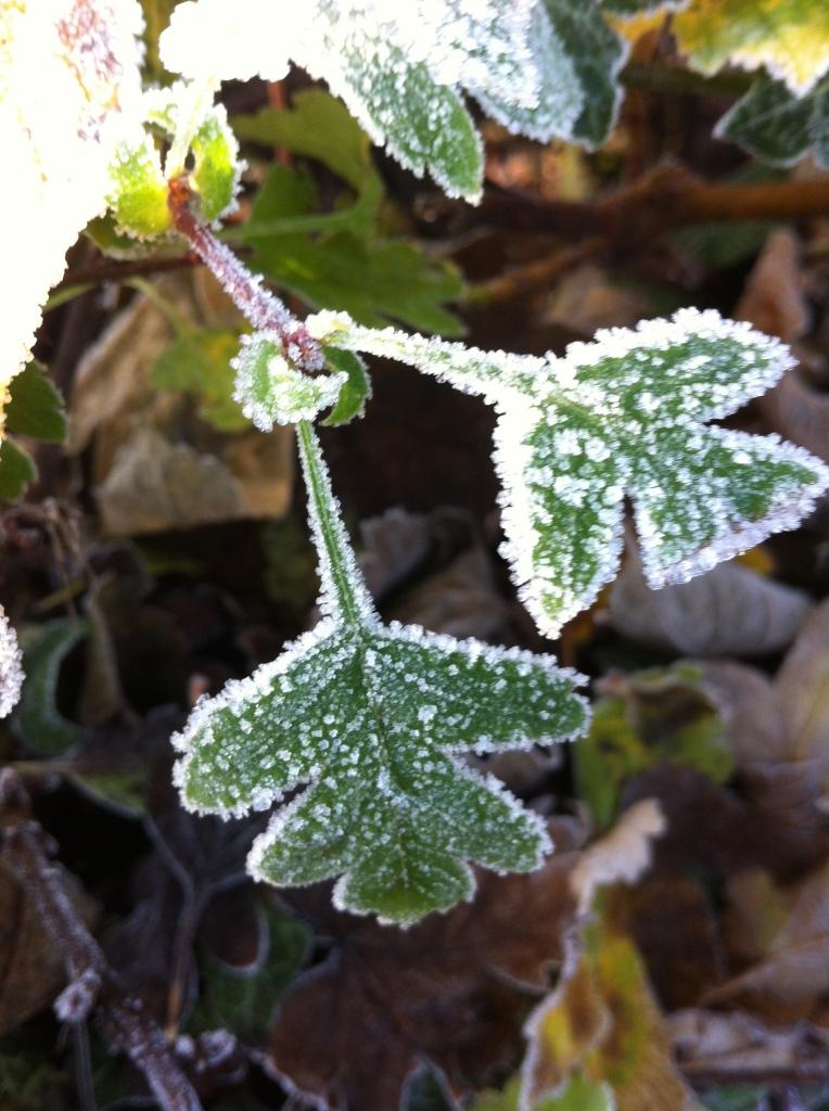 Frost, winter, 365