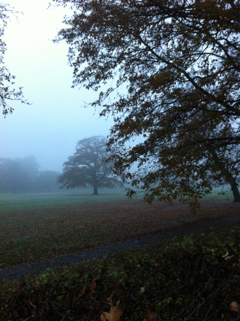Trees, autumn, mist, 365