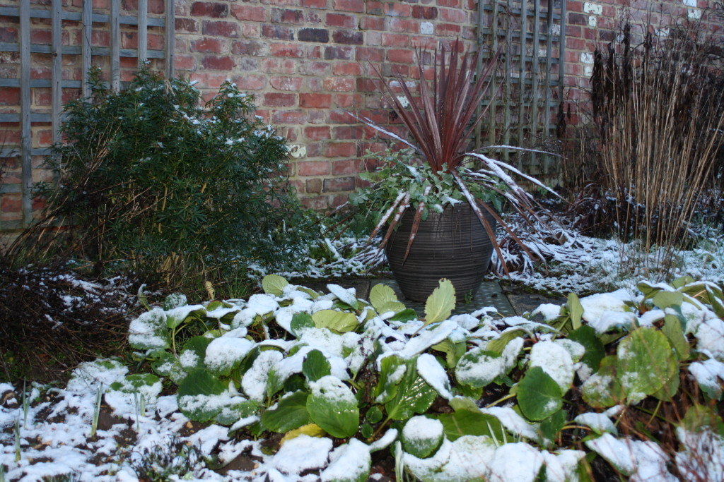 Snow, Garden, Weather, Cold, The Gallery