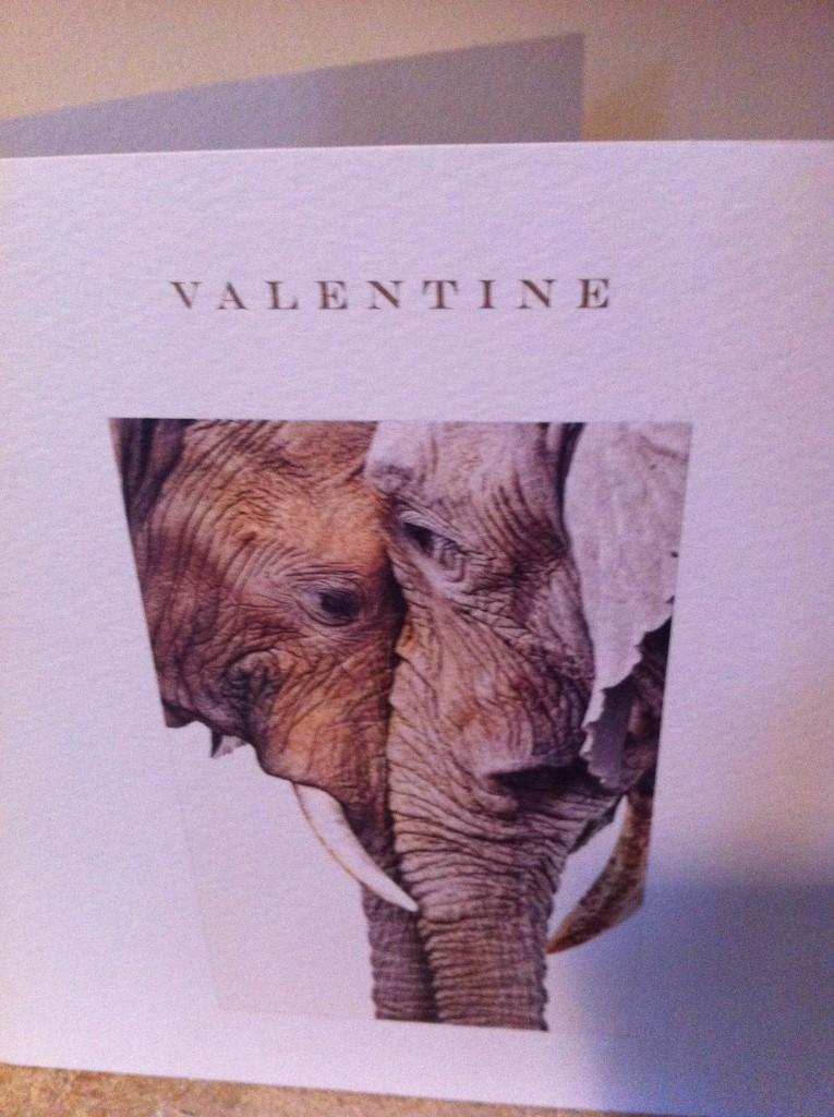 Valentine, Husband, 365