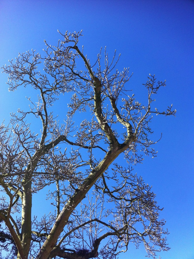 Blue sky, Tree, Silhouette, 365