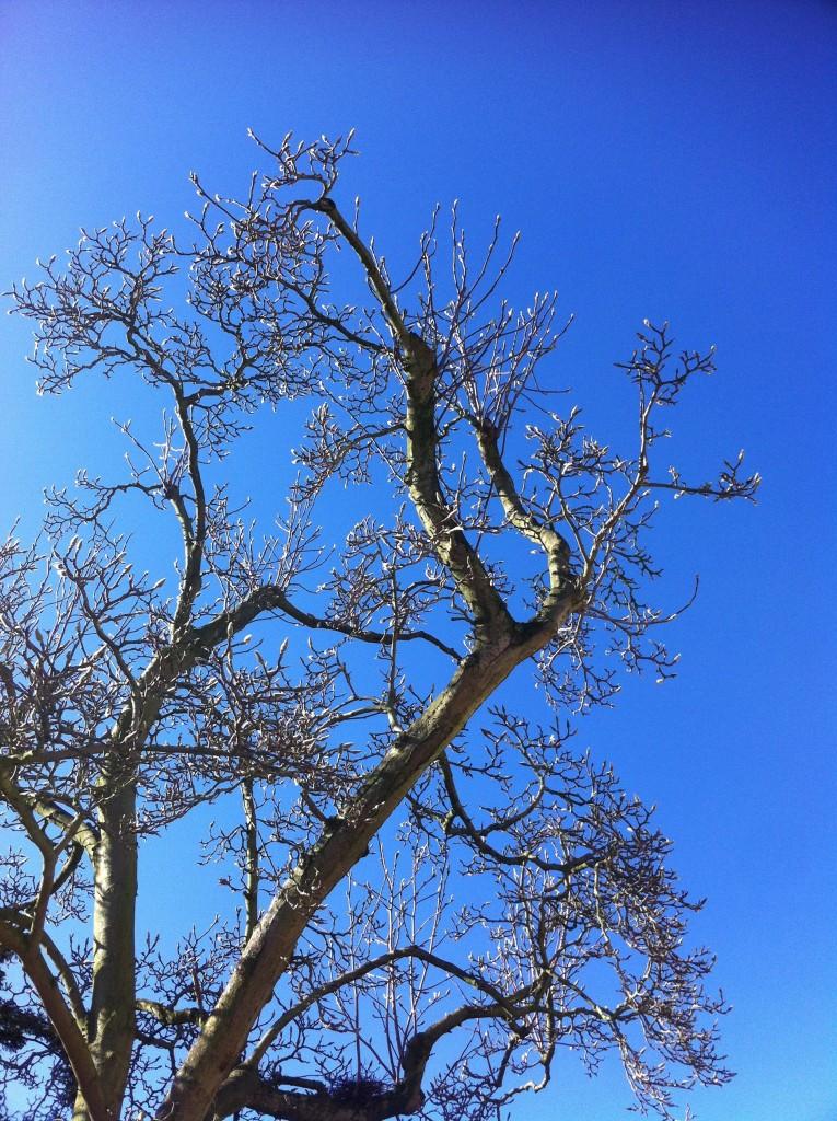 Blue sky, Tree, Silhouette, 365
