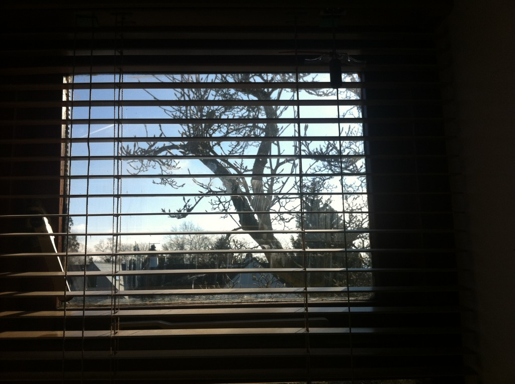 Window, View, Tree, Silhouette, Blind, Magnolia