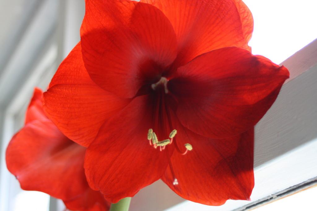 Flower, 365