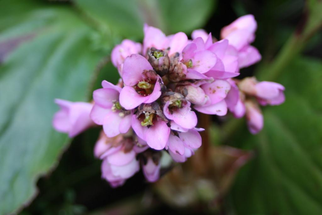 Flowers, Garden, Spring, 365