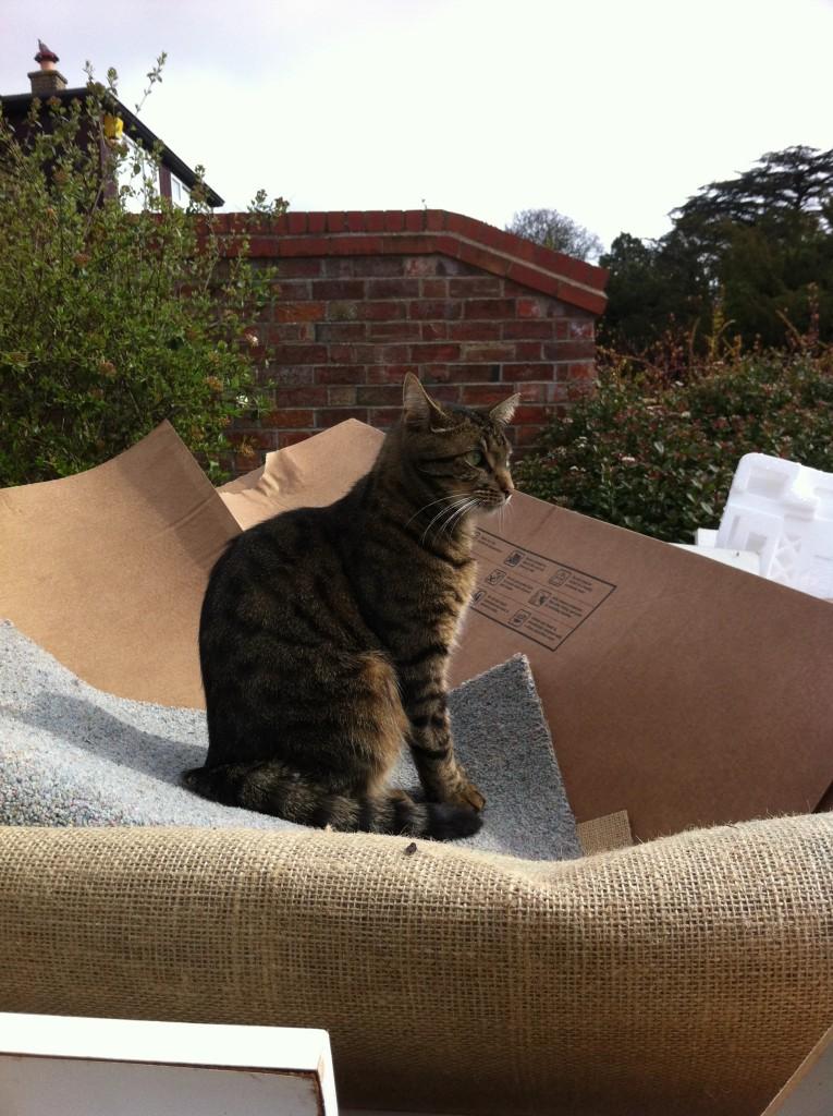 Cat, Skip, New kitchen, 365