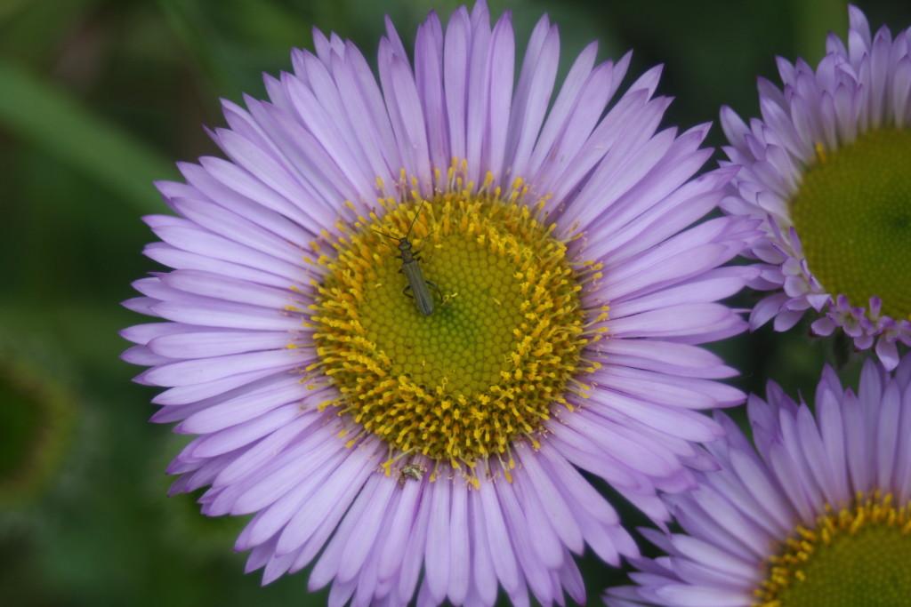 Flower, The Gallery, Garden, Macro