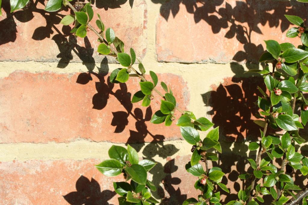 Shadows, Garden, Silent Sunday, My Sunday Photo