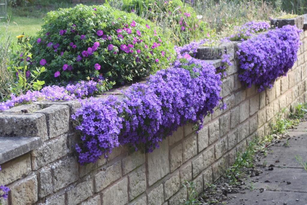 Garden, Flowers, Summer, 365