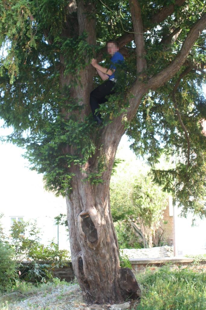 Tree, Son, 365