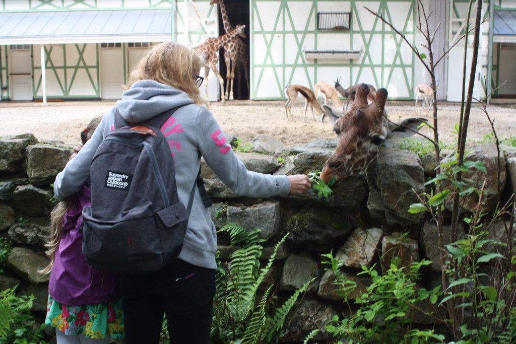 Amsterdam, Amsterdam Zoo, Giraffes, 365