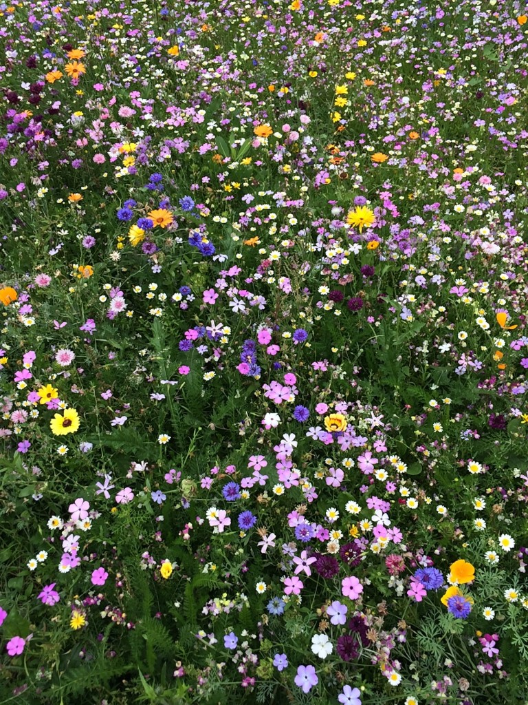 Wildflowers, Summer, 365