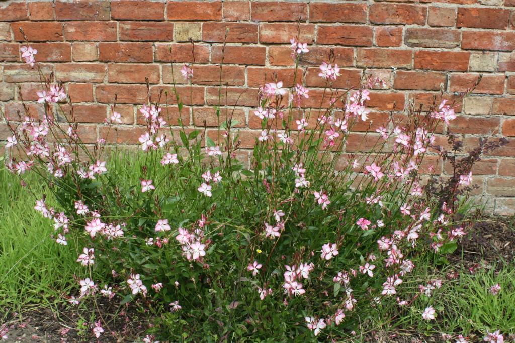 Flowers, Garden, 365