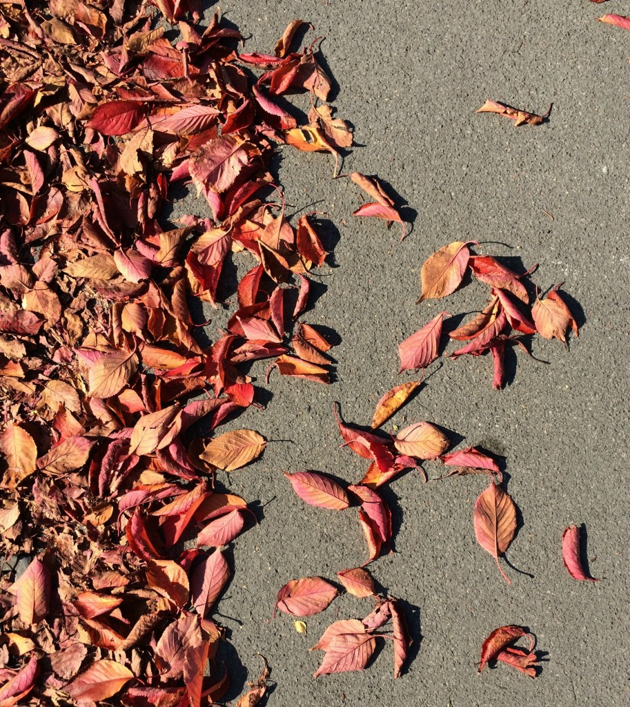 Autumn, Leaves, 365