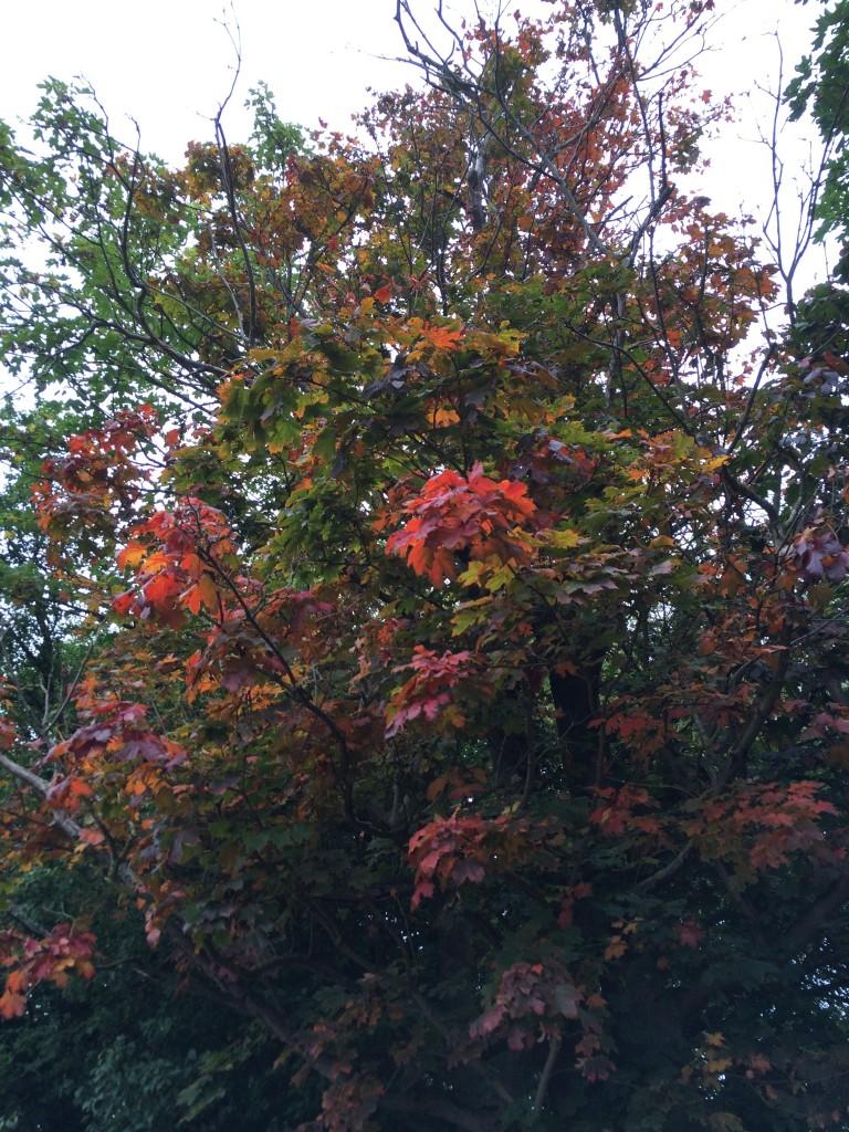 Autumn, Trees, Leaves, 365