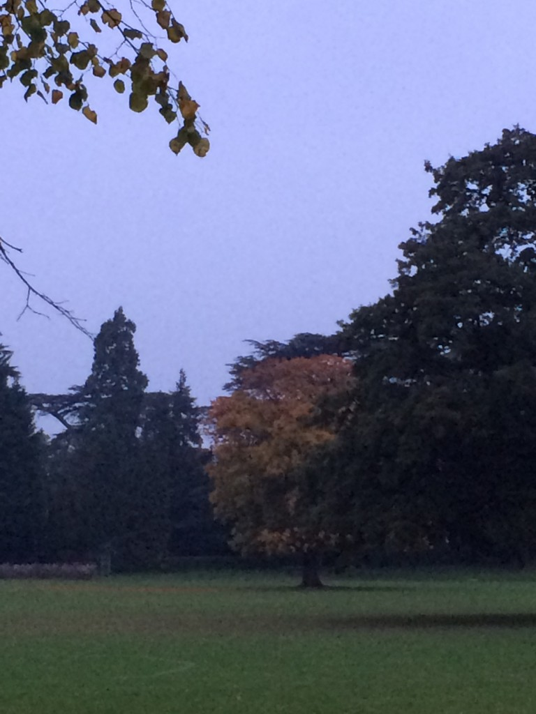 Autumn, Morning, Walk, 365