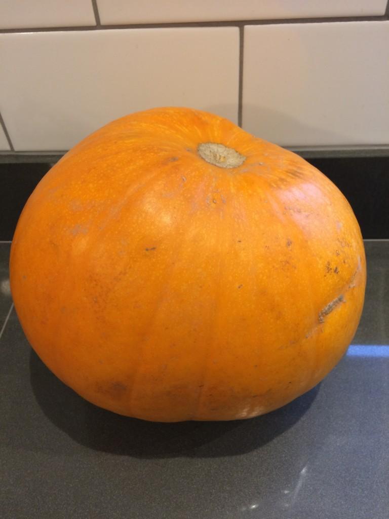 Pumpkin, Halloween, 365