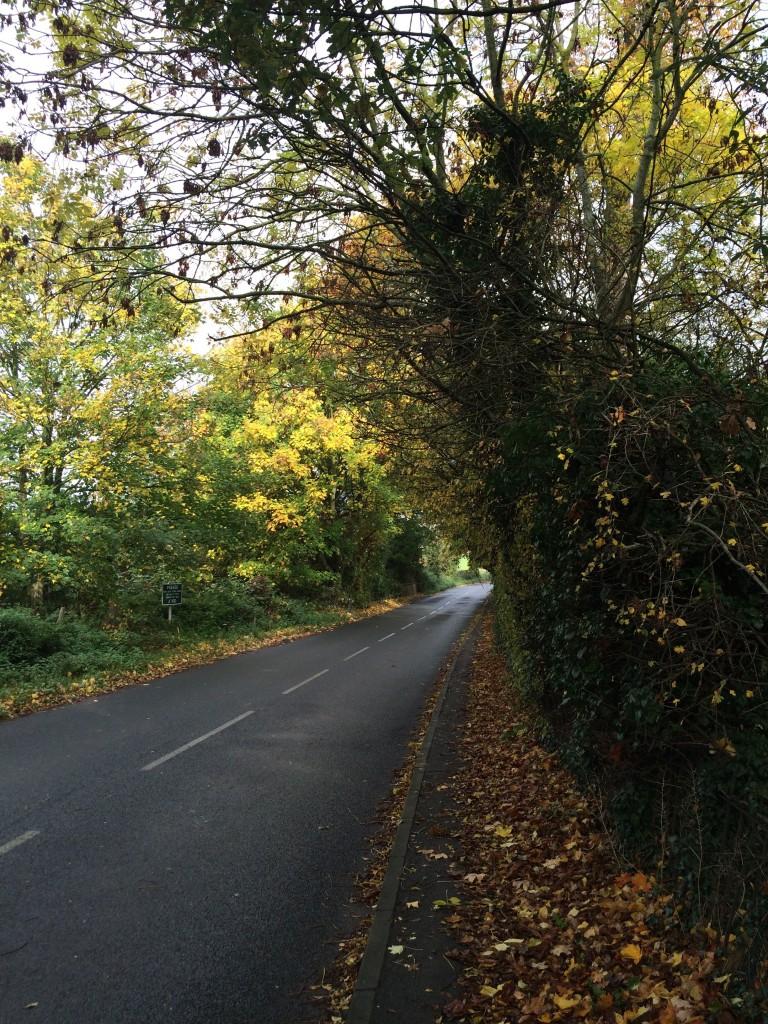 Leaves, autumn, 365