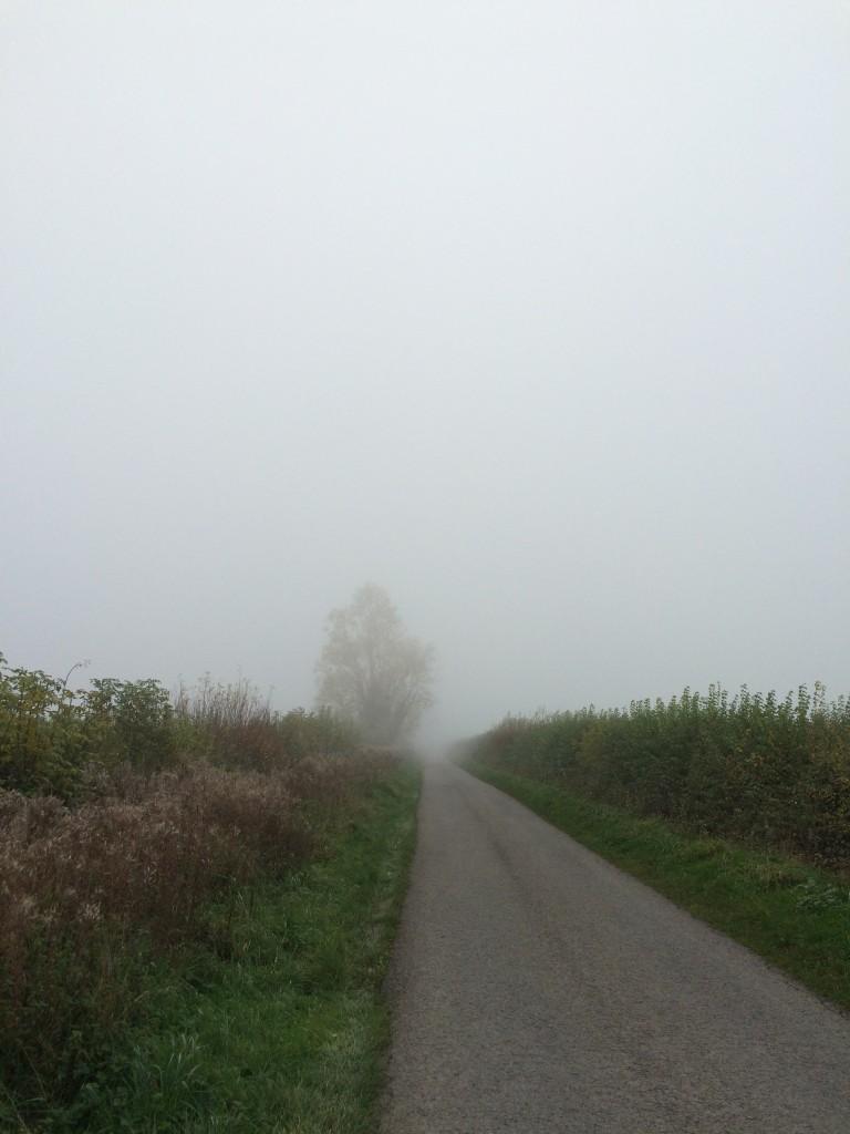 Mist, Fog, Autumn, 365