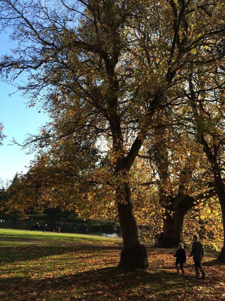 Autumn, Daughter, Niece, Trees, 365