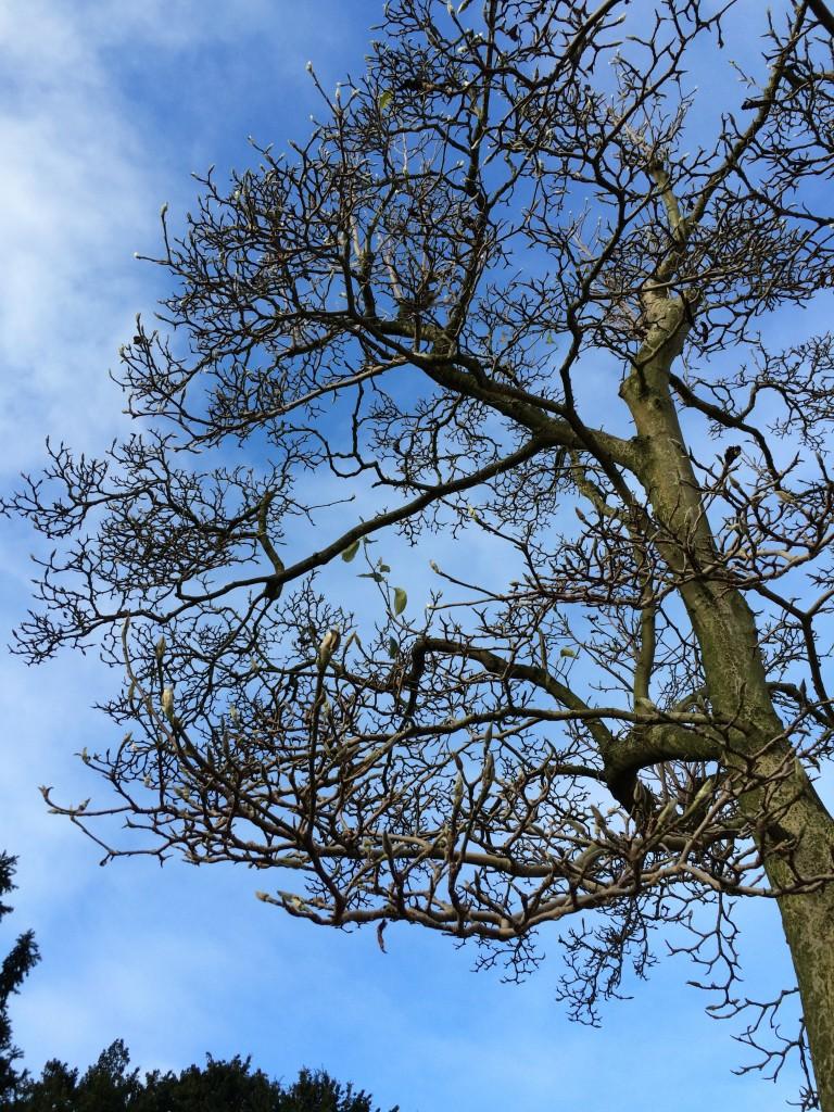 Tree, Garden, 365, Autumn