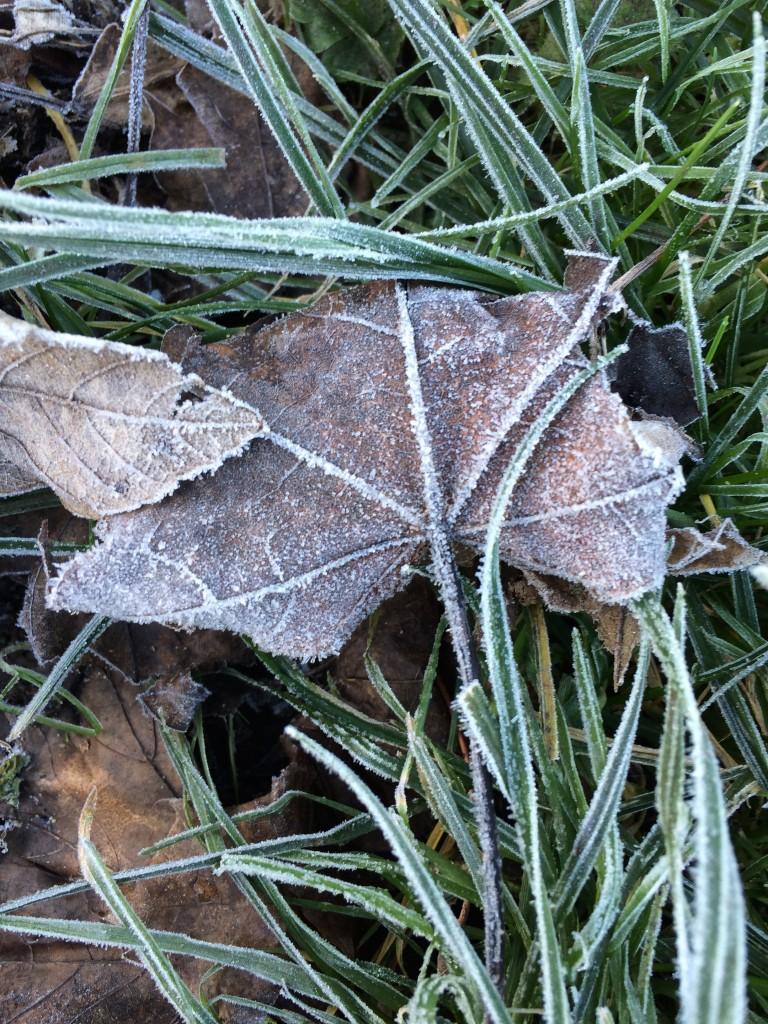 Leaf, Frost, Frosty, 365, 366