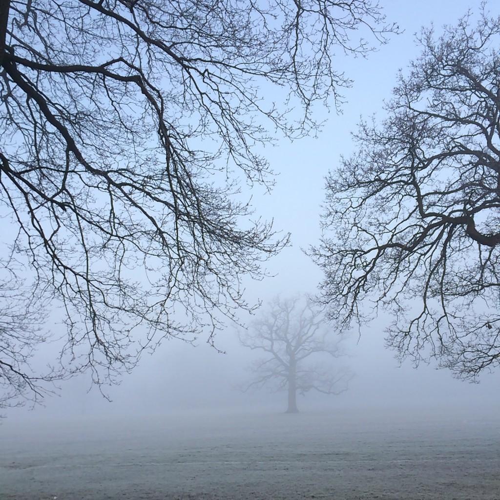 Silent Sunday, My Sunday Photo, Frost, Mist, Winter
