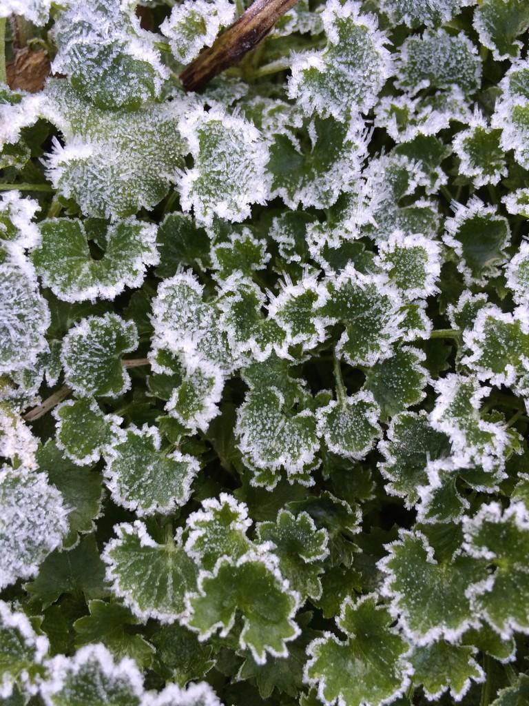 Frosty, Garden, Frost, 365, 366