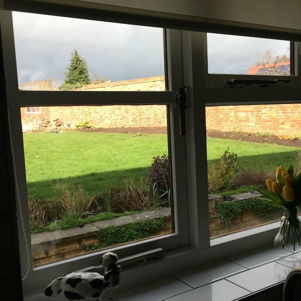 Window, Garden, Sky, 365, 366